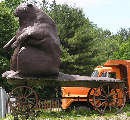 Beaver on wagon