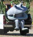Clam mascot