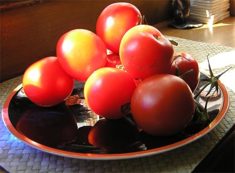 June tomatoes