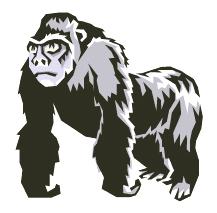 big shouldered gorilla