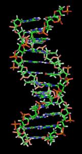 DNAorbit