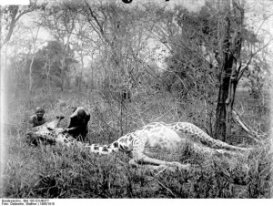 796px-Bundesarchiv_Bild_105-DOA0377,_Deutsch-Ostafrika,_Giraffe