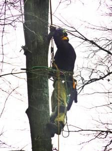 treecling