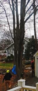 treecrew