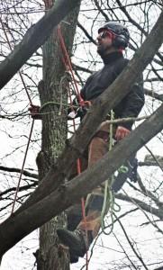 treeready