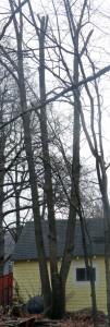treetriple