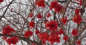 ecranberry